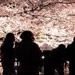 夜桜の服装|お花見の防寒対策のポイントとコツ