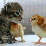 かわいい動物画像で癒やされて| まとめ12選