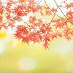 秋にすること秋にしたいこと100選|食べる・遊ぶ・楽しいこと