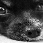 犬服型紙/無料ダウンロード8選|作り方も丁寧なサイトに感謝